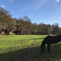 Horse Riding at Limefitt Park