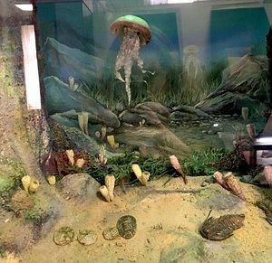 Геологический музей ВГУ