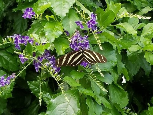 Flowers and stripped butterfly