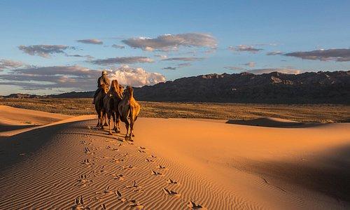 Camel herder in Mongolia Gobi
