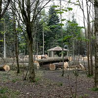 Wendover Woods - Tree felling for new car park