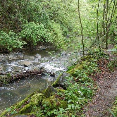 Très verdoyant dans le vallon de la Vuachère