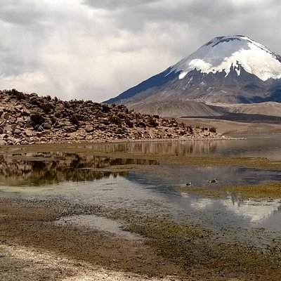 Birdwatching in Chungara lake ,Lauca n.park