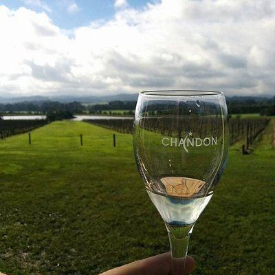 Tour the spectacular lush green pastures and rolling hills of the Yarra Valley Wine Region