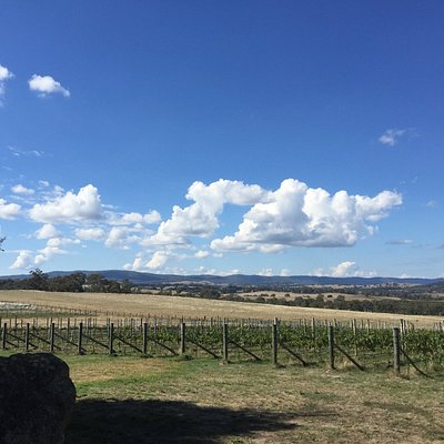 Looking out over Castagna Vineyard