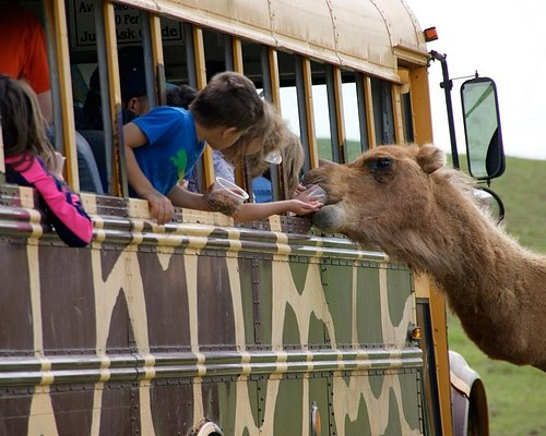 Feed and interact with animals from 6 continents at Fort Chiswell Animal Park!