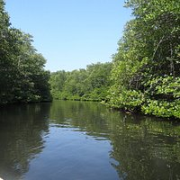 Views of the mangrove forest.