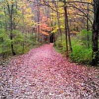 Pheasant Run Trail
