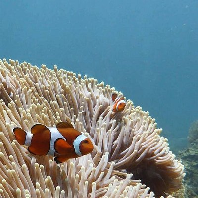 Every bodies favourite little fish- Nemo! Diving with Siren Diving Lembongan