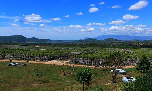 Overview of La Planttation - Kampot Pepper farm