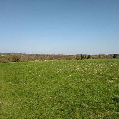 Basingstoke common