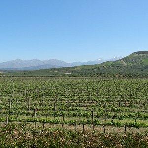The beautiful Strataridakis vineyard