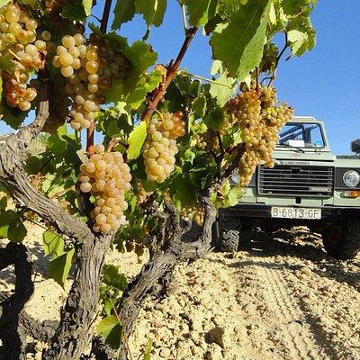Land Rover Wine Tour