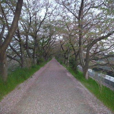 桜並木が綺麗でした