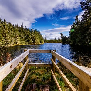 Viewing platform at Lake Naweela, Blanemore Forest, Moygownagh