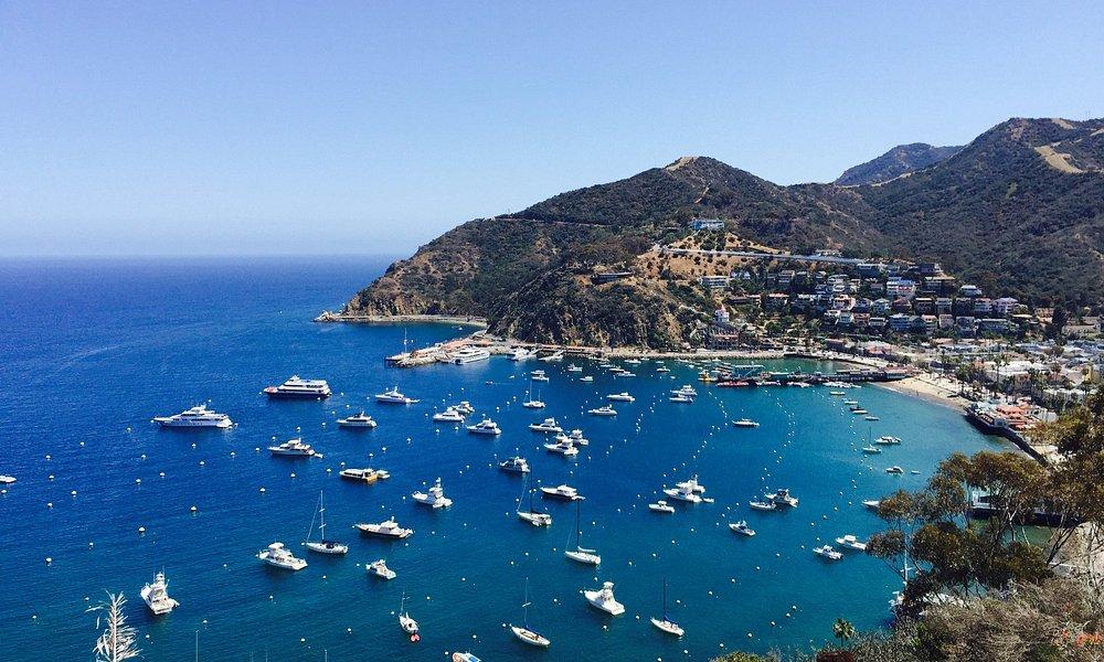 Catalina's beauty. On the way up to Zipline start