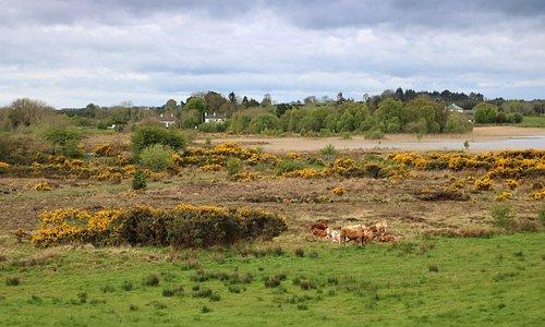 Cummer cottage (left)