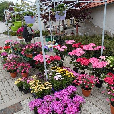Virágok színkavalkádja