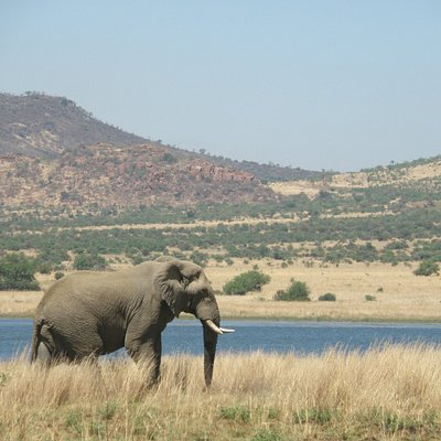 Eco-conscious and responsible tour operator. Tours and Safaris in Pilanesberg since 2007.