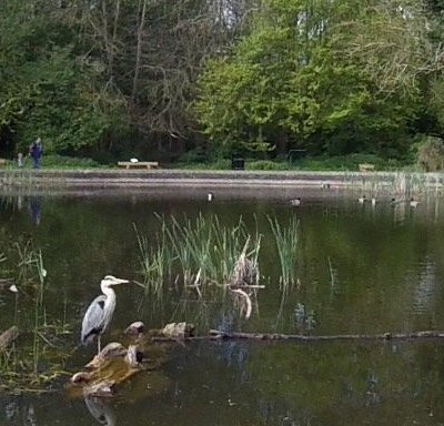 Herons and other bird life abundant in this serene setting