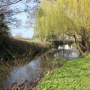 Spring on the River Alyn