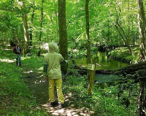 nearing the creek appox half way