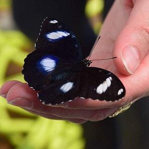 Kraina Motyli