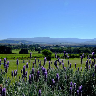 Magnificient views at Mountain Ridge Wines