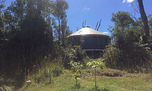 Yoga studio in a beautiful new yurt in the forest