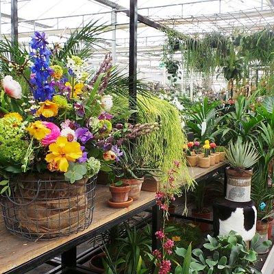 Plantenassortiment bij Greenhouse