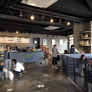 The Wag Club Pet Cafe and Playground.