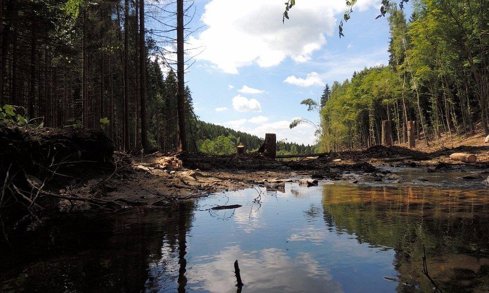 Laid Loiseau, rivulet flooding, tree cutting landscape, June 2014