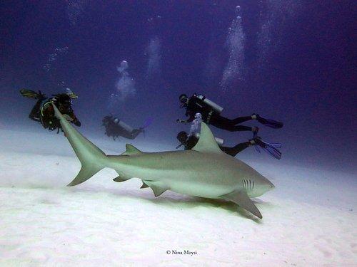 Bucea con los Tiburones Toro en la costa de Playa del Carmen