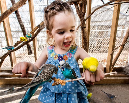 Come meet our feathered friends in Parakeet Paradise!