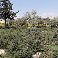 Bloomfield Garden - shrubbery