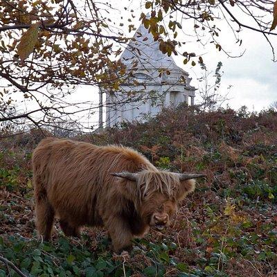 Cobham Wood & Darnley Mausoleum