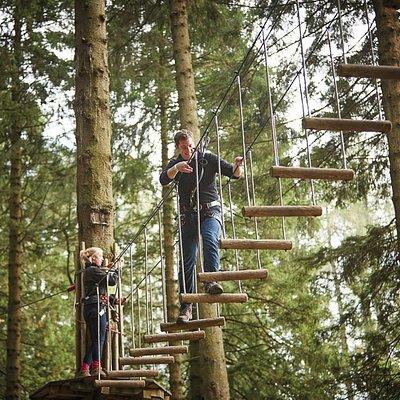 Go Ape Tree Top Adventure at Moors Valley