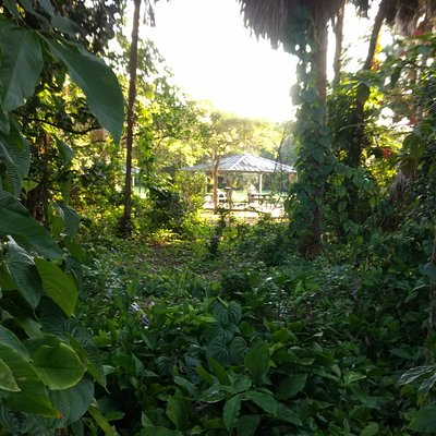 A view of a gazebo through tropical forest