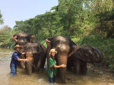 Elephant Mahout Life Experience