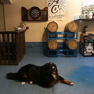 Even Jack felt at home at Allegheny City Brewing