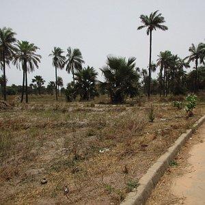More back path thru' the srub and palms