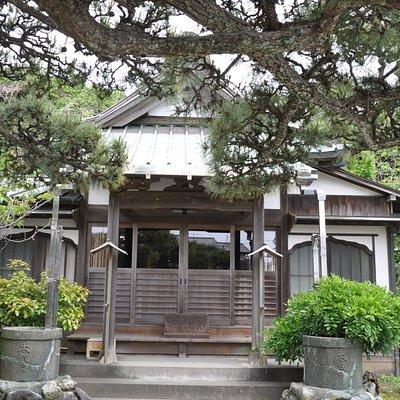 本成寺/本堂前の松の木がすばらしい