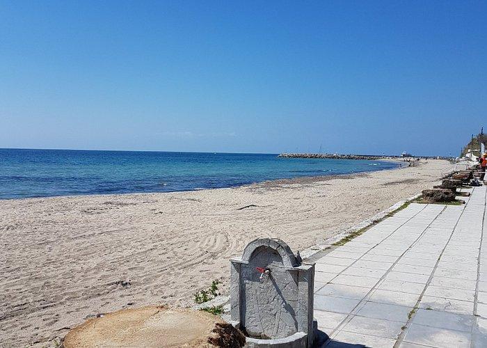 So sah es nach dem Winter 2016-2017 am Strand von Kallikratia aus.Alle Palmen erfroren!!!
