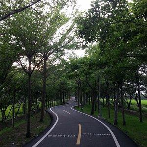 涼爽舒適的林蔭大道 悠閒地騎車+運動。