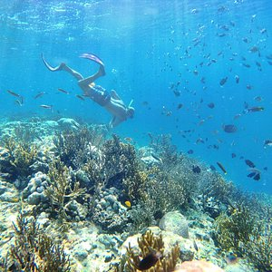 snorkeling with ton of fishes