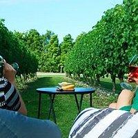 Tastings amongst the vines