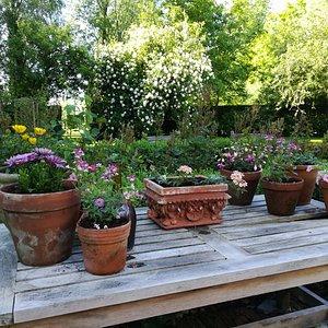 mooie en grote tuin!