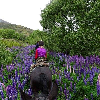 Prospectors Dream Pack Trail