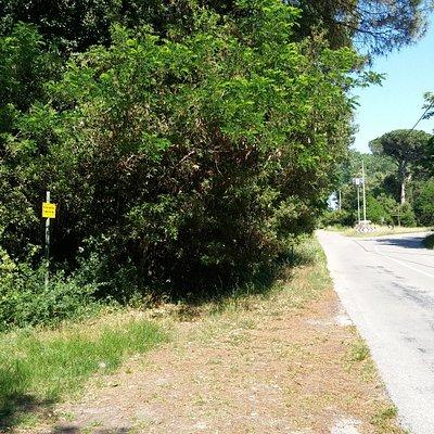 Via Biverare, ovvero la strada che attraversa il bosco