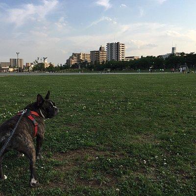 夕方の綾瀬川左岸広場
